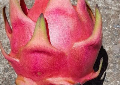 pitaya cueilli