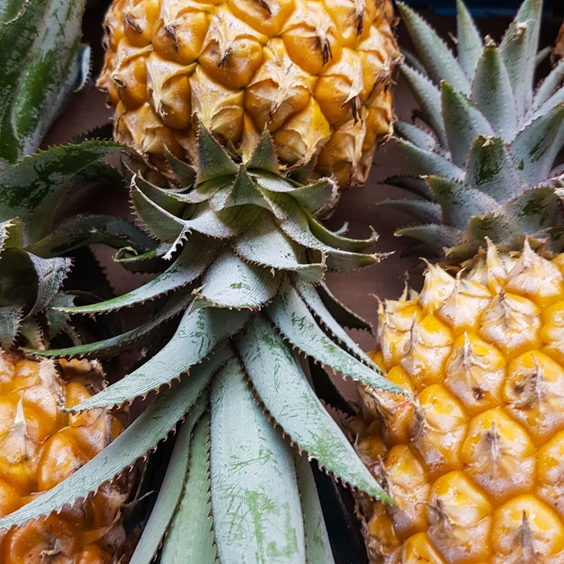 Importante Exportation d'Ananas